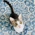 Team Pets | GitLab